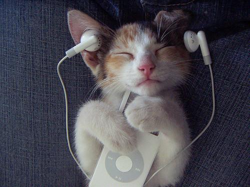 jazz-cat