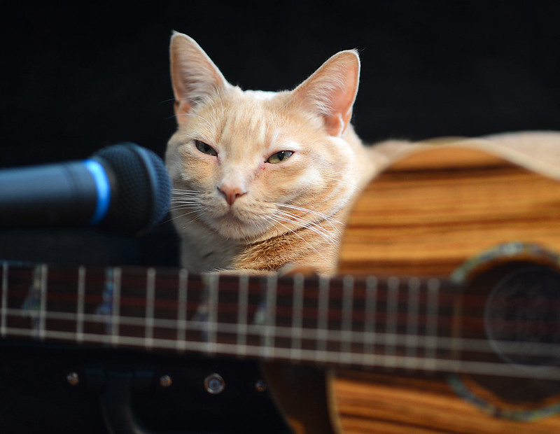 rock-and-roll-cat