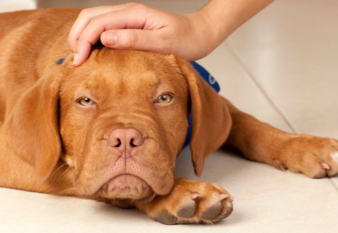 How to know if your dog is suffering from heatstroke