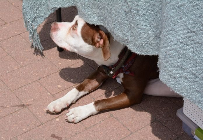 Know the warning signs of canine heatstroke