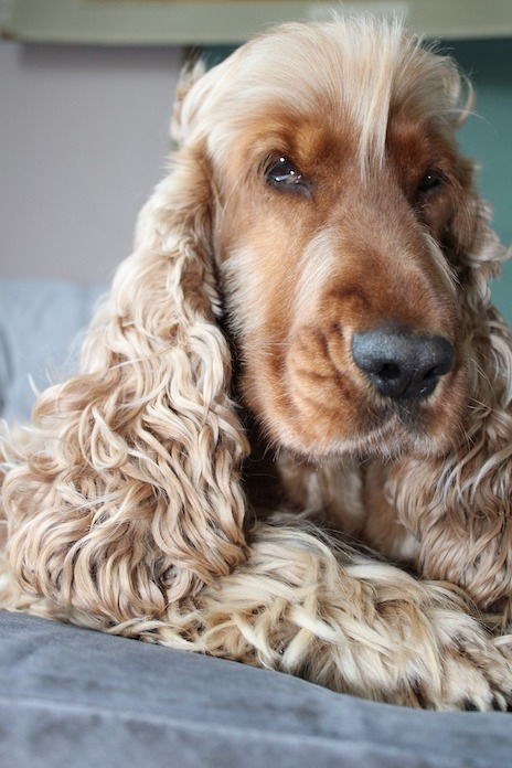 dog names for dogs with long ears