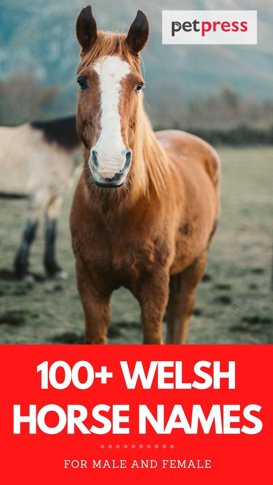 100+ welsh horse names