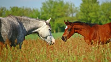 Top 100+ Welsh Horse Names
