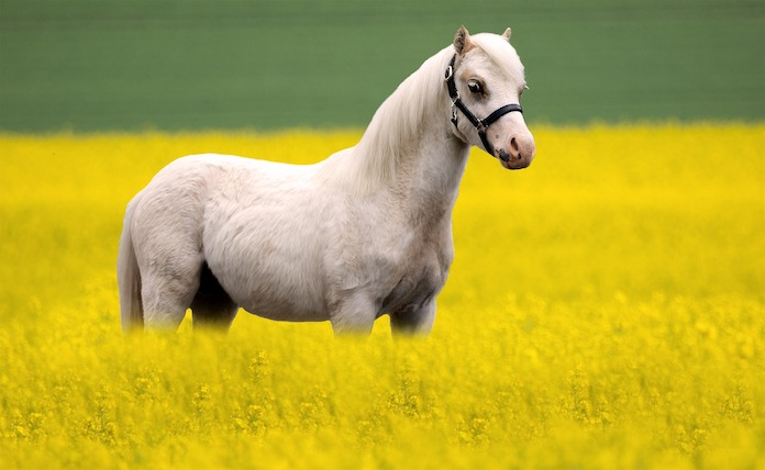 Best Welsh horse names (with meanings)
