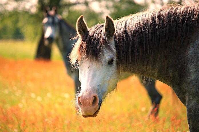 Male Welsh horse names