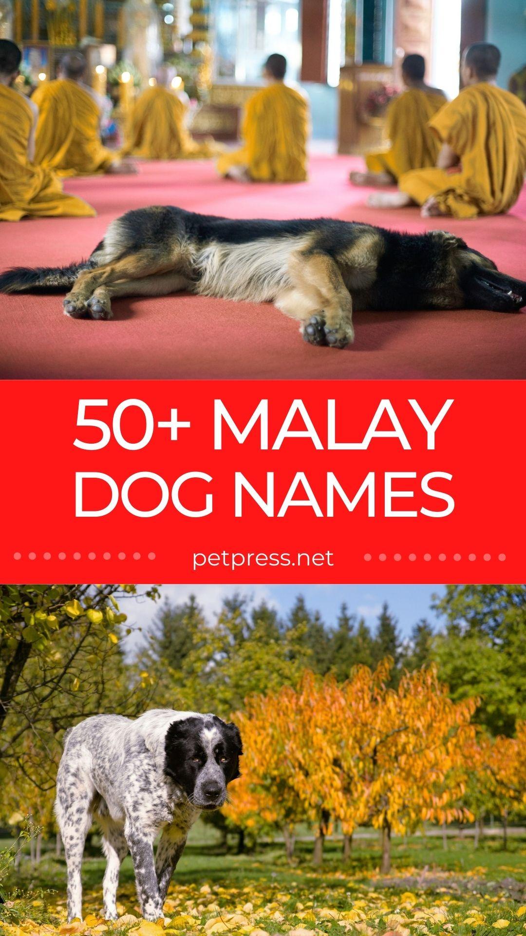 50+ malay dog names