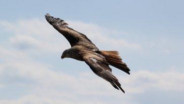 badass-male-bird-names