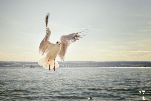 badass-female-bird-names