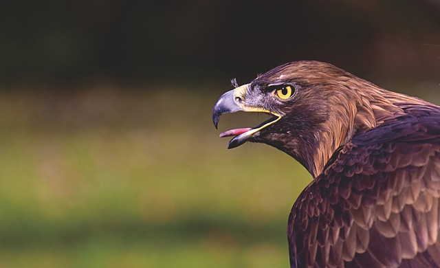badass-gengster-bird-names