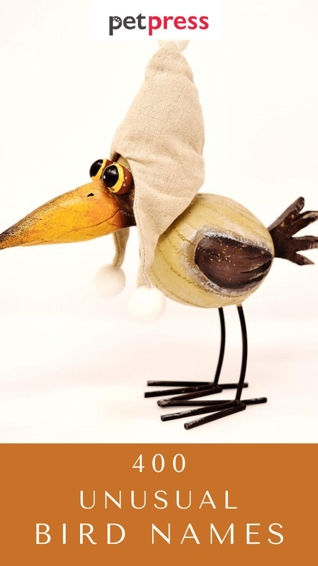 unusual-bird-names