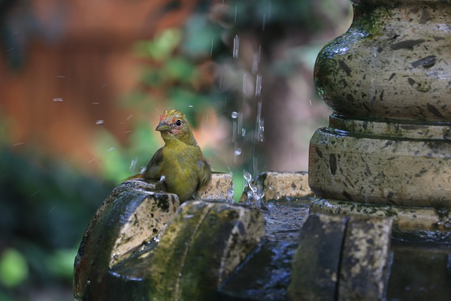 unusual-girl-bird-names
