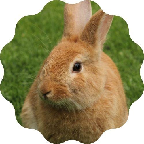 rabbit name generator