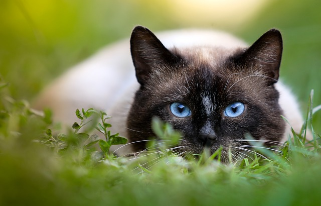 turkish-male-cat-names