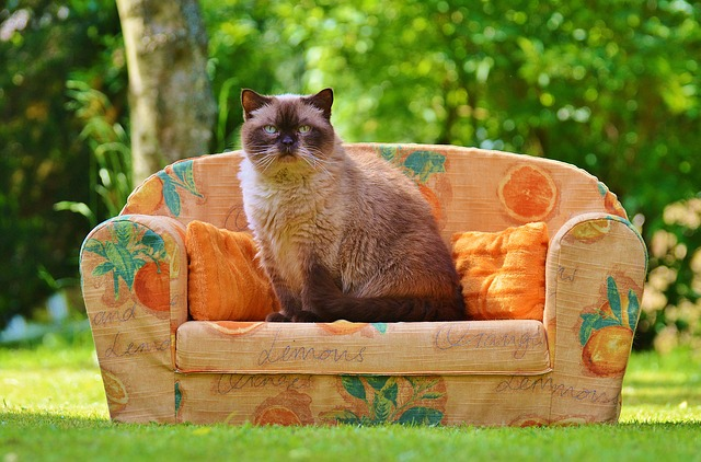 popular-turkish-cat-names