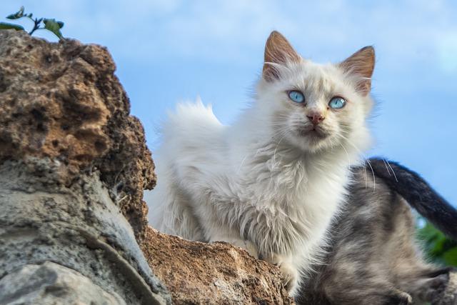 common-turkish-cat-names