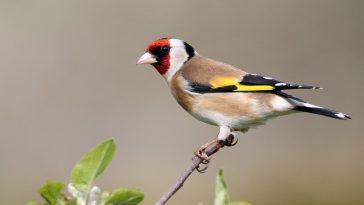famous-unisex-bird-names