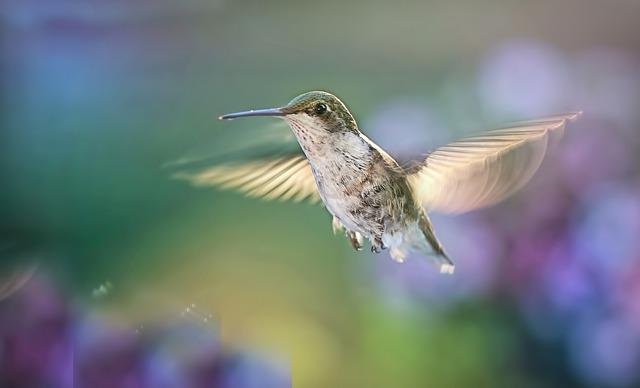 cute-unisex-bird-names