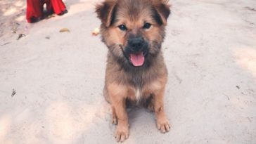 Cambodian Dog Names for naming a puppy