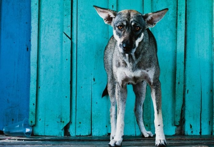 Male Cambodian Dog Names