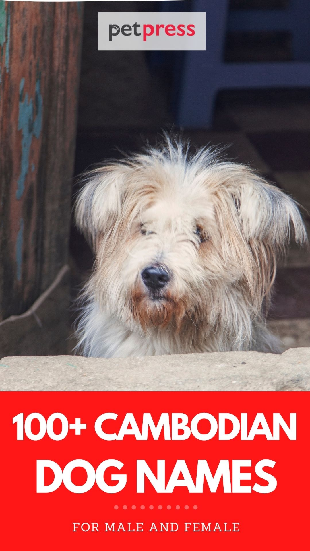 100+ cambodian dog names