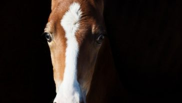 Over 120 Best Marwari Horse Names
