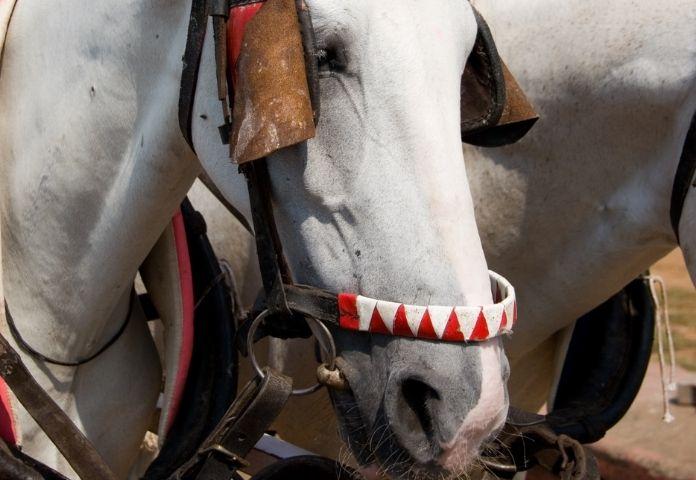Best Marwari Horse Names