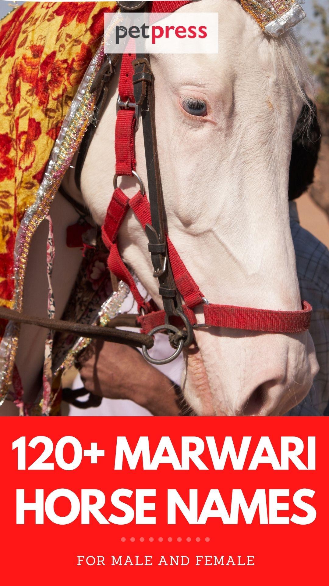 120+ marwari horse names