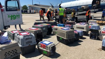 The dogs arrived safely in their crates with paper work tapped to their kennels