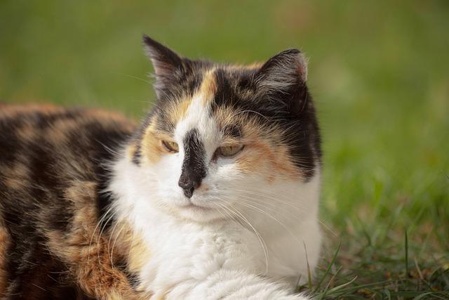 male-buddhist-cat-names