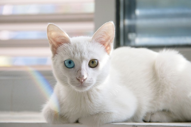 female-buddhist-cat-names