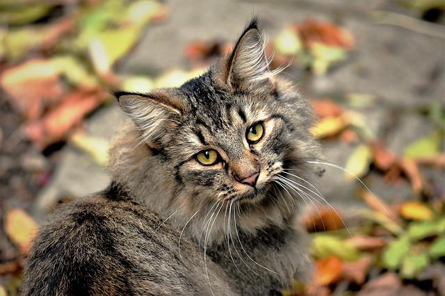 unisex-buddhist-cat-names