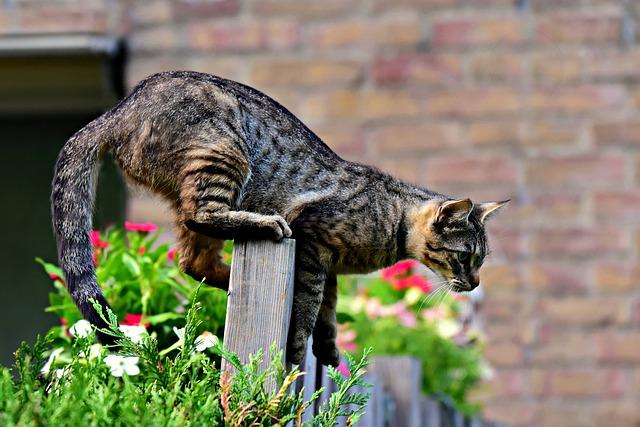 male-zen-cat-names