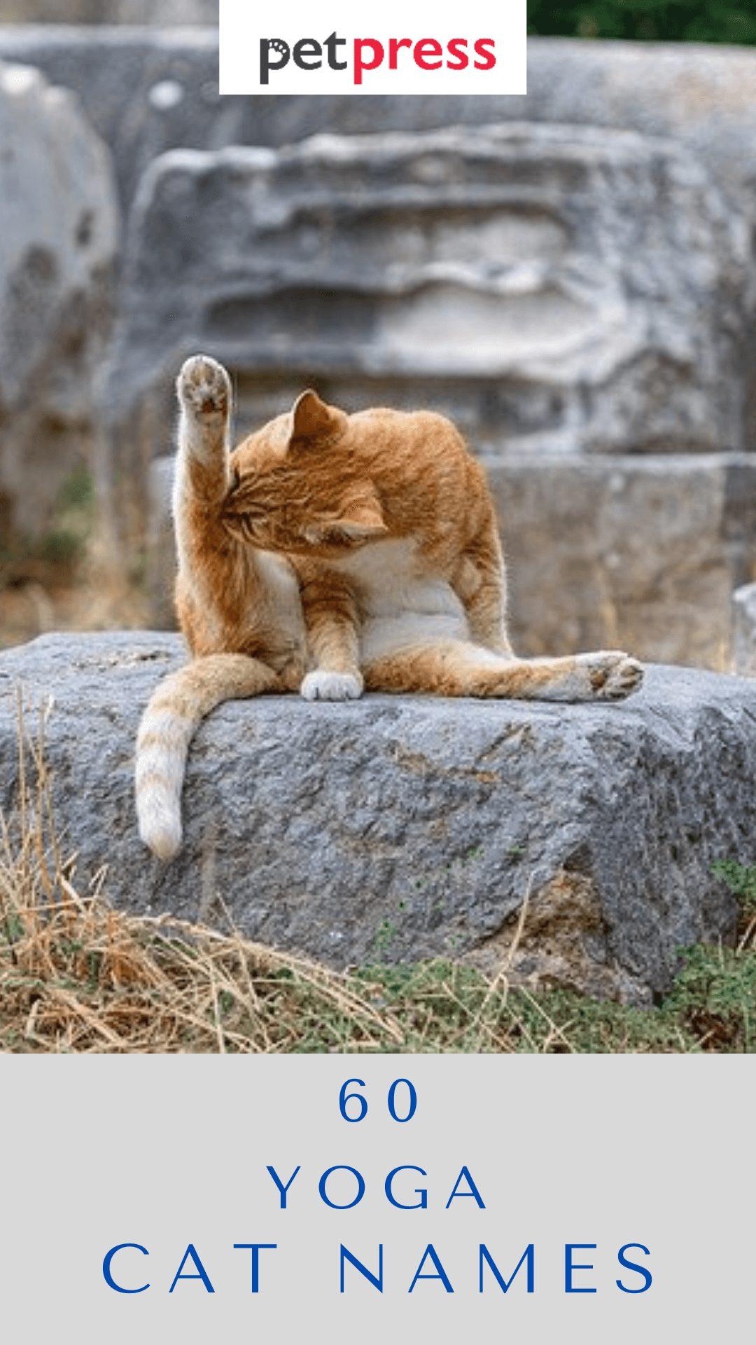 yoga-cat-names