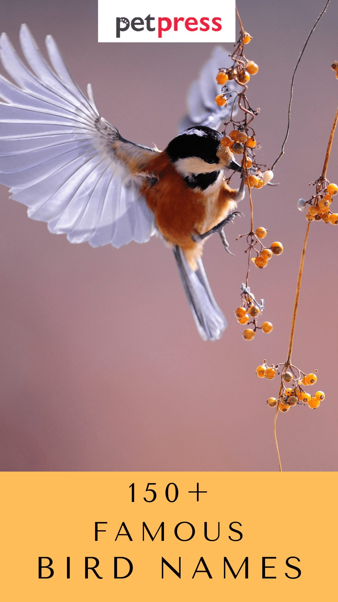 famous-bird-names