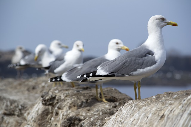 famous-bird-names-from-mascot
