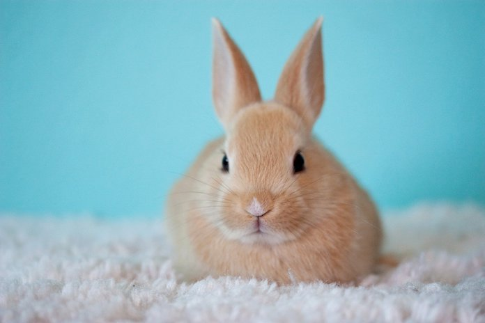 Famous names for male and female rabbits