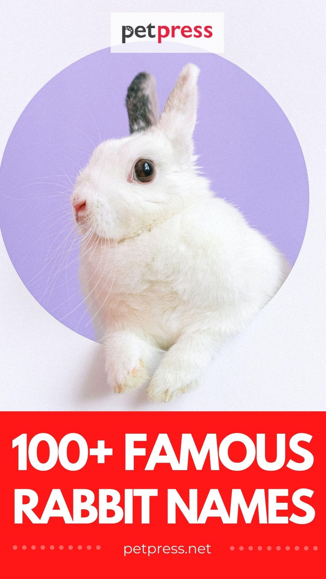 100+ famous rabbit names