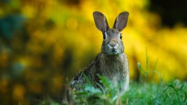 100+ Famous Rabbit Names and Characters