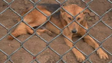 171 Dogs Saved from South Korea's Brutal Dog Meat Trade Arrive in the U.S.