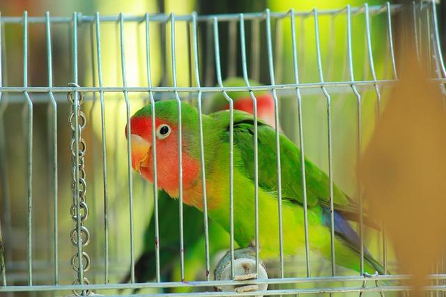 male-lovebird-names