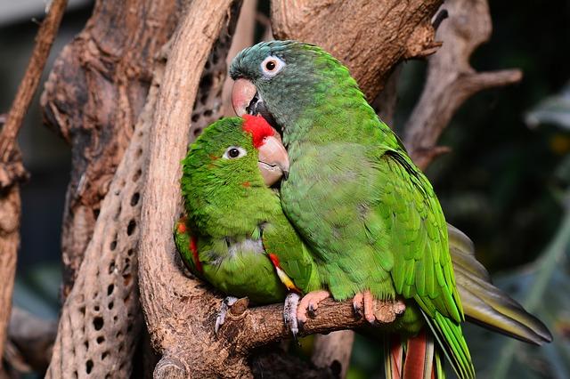 pairs-lovebird-names