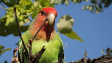 funny-lovebird-names
