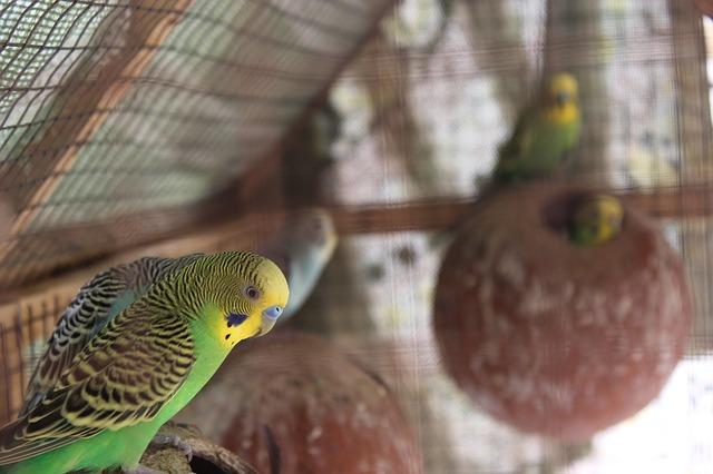 cute-lovebird-names