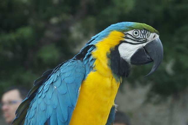color-lovebird-names