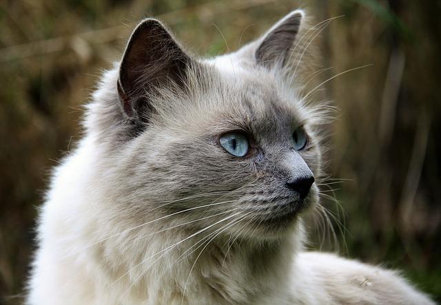 female-fairy-cat-names