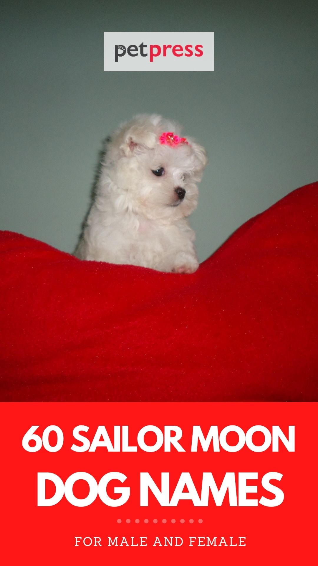 sailor moon names for dogs