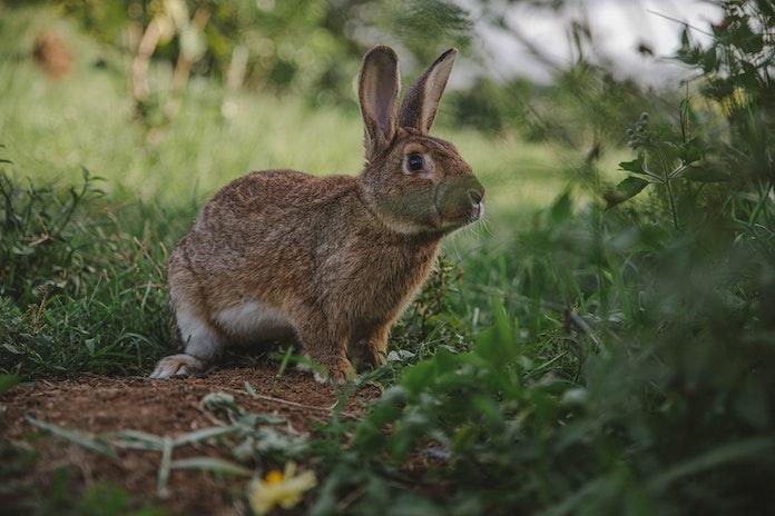 Female Indian Rabbit Names