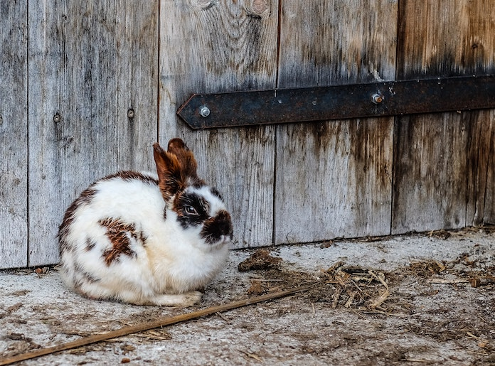 Male Indian Rabbit Names