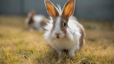 70+ Indian Rabbit Names - Best Indian Pet Name Ideas