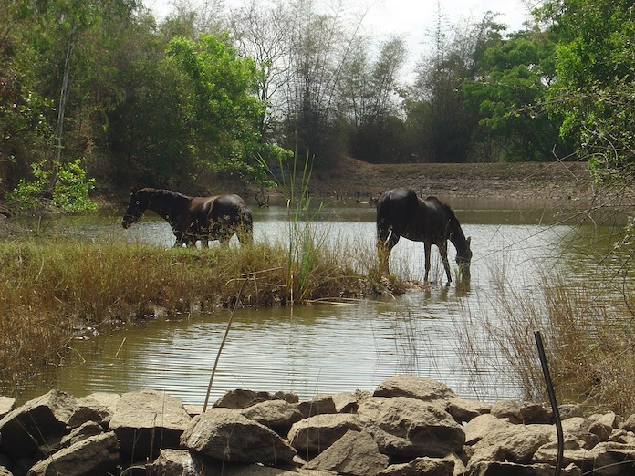 tamil horse names for naming a horse